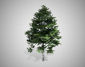 Black Gum Tree 3D model