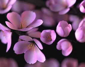 3D model Sakura japan flover in pot