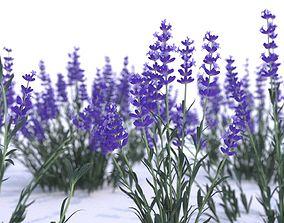 3D Lavender 12 variations