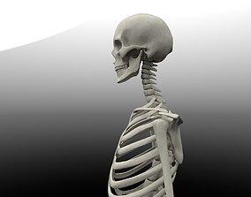 Skeleton 3d model anatomy