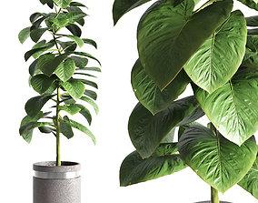 3D model Indoor plant 15