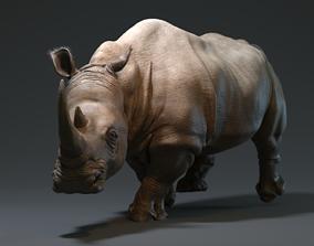 3D asset game-ready Rhino herbivore