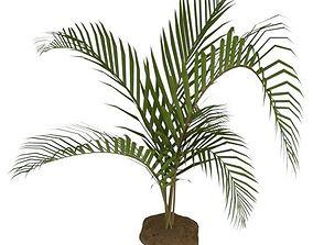 3D model Palm001