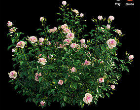 Plant rose set 07 3D
