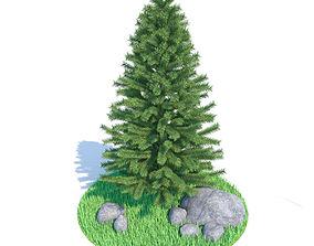 x-mas Spruce - fir 3D
