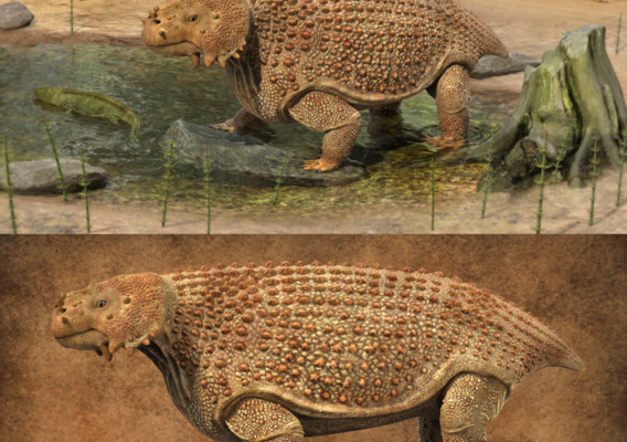 Scutosaurus karpinskii