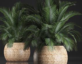Decorative palm tree in a pot kentia 3D