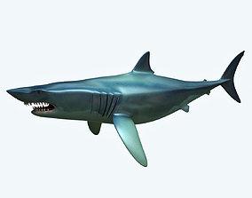 sea Shark 3D model