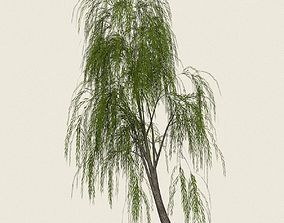 Game Ready Willow Tree 04 3D asset