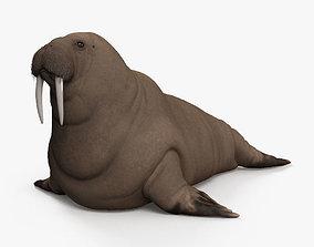 3D Walrus HD