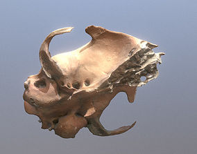 3D Photorealistic scanned small highpoly skull of rodent