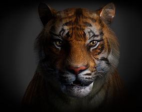 3D asset animated Tiger