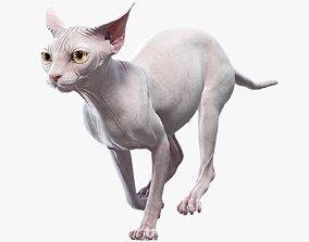 Sphynx Cat White Animated 3D