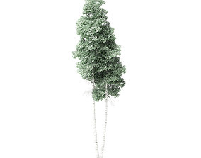 Quaking Aspen Tree 3D Model 9m