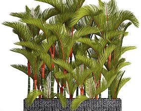 Collection plants Cyrtostachys renda 3D model