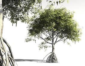 rhizophora EVERYPlant Red Mangrove 17 -- 7 Models 3D