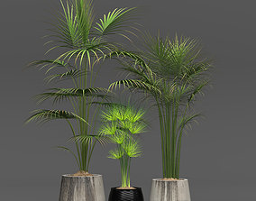 3D Collection of plants pot-plant