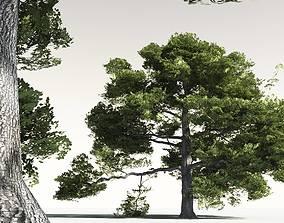 EVERYPlant English Oak 15 -- 10 Models 3D