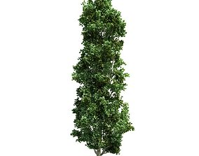 3D Narrow Landscape Tree