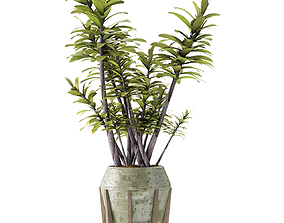 3D flower Plant in Pot Flowerpot Exotic Plant