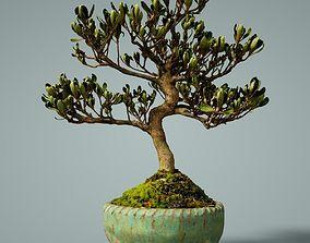 Bonsai Tree 3D asset