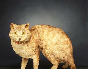 Cat Photorealistic Posed 3D model