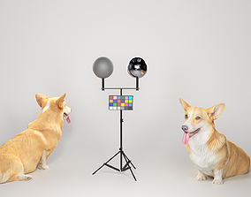 Corgi dog sitting 02 3D asset