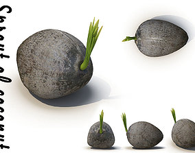 3D Sprout of coconut 2