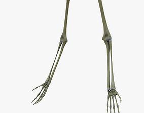 Human Arm Bones Skeleton 3D model