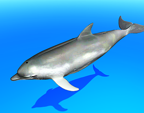 3D asset animated low-poly Dolphin