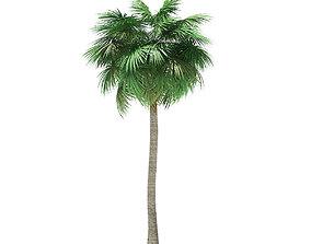 Sabal Palm Tree 3D Model 12m