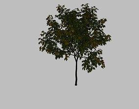 3D Tree short