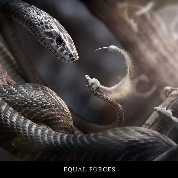 Equal Forces