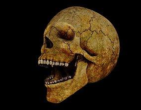 3D model rigged Rotting Skull