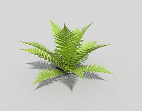 Fern exterior 3D asset realtime