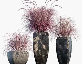 Plant in pots 53 Grass 3D
