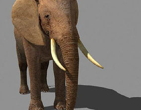 SUPERB LOW-POLY ELEPHANT - 3d model animated