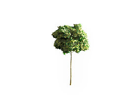Low Poly Tree Stylish 3D model realtime textured