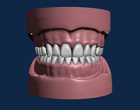 teeth Dental model with natural anatomy typodonts