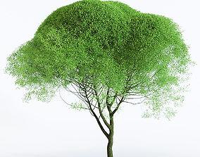 3D Salix Fragilis - Willow Spherical