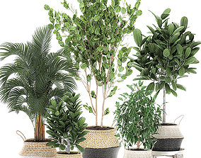 Decorative trees for the interior in basket 560 3D