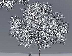 3D Ash-tree 01 winter