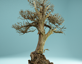 bush 3D model RAW SCAN Dead Bonsai Tree High Poly 02