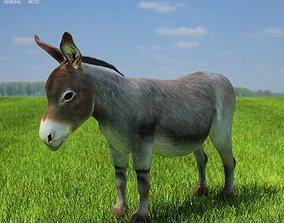 Donkey Equus africanus asinus 3D asset