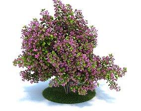 Purple Flower Bush 3D model