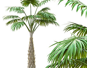 3D model Small palm