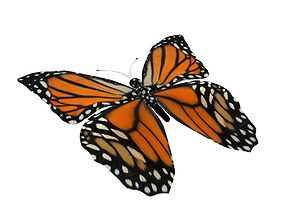 3D asset Rig Butterfly