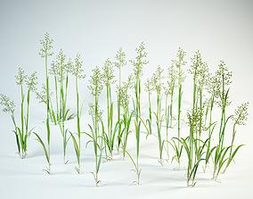 3D model grass set Festuca pratensis