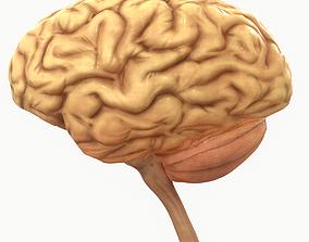 Human Brain 3D asset realtime anatomical