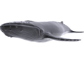 3D model Humback Whale